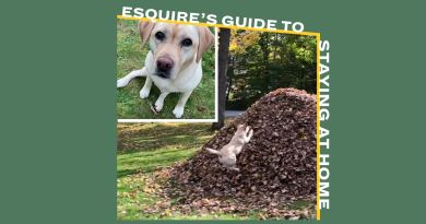 I Want to Watch This Dog Jump into Piles of Leaves Over and Over and Over and Over 3