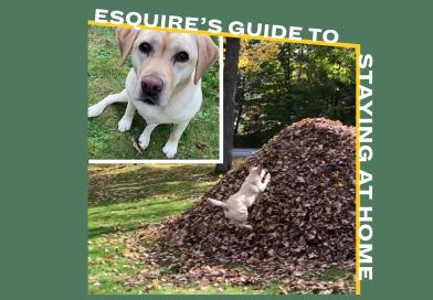 I Want to Watch This Dog Jump into Piles of Leaves Over and Over and Over and Over