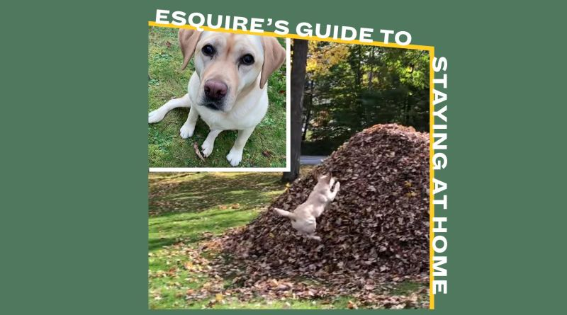 I Want to Watch This Dog Jump into Piles of Leaves Over and Over and Over and Over 13
