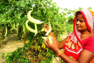 व्यवसायीक तरकारी खेतीले आत्मनिर्भर बन्दै दलित समुदाय
