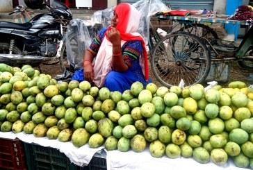 उत्पादित आँपले बजार नपाउँदा किसानहरु मारमा