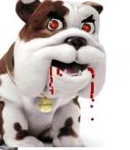 Bad dog.