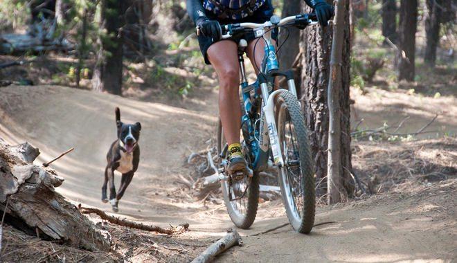 dogchasingbike