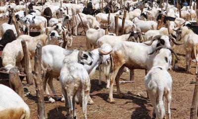 Sallah: Clerics warn Muslims against borrowing to buy rams