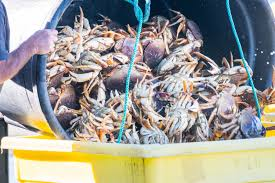Finally! Commercial Dungeness crab season opens in Northern California