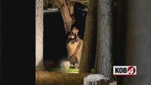 Virgin Mary Sighting in New Mexico Tree!