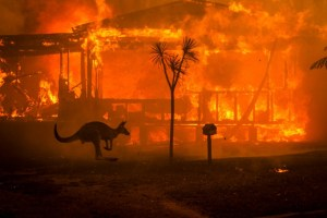 Australia wildfires: Entire species may have been wiped out by inferno, conservationists say