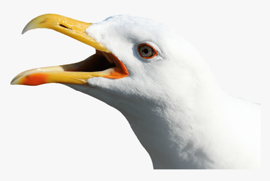 Edinburgh woman bit off man's tongue in street brawl before seagull swooped down and ate it!