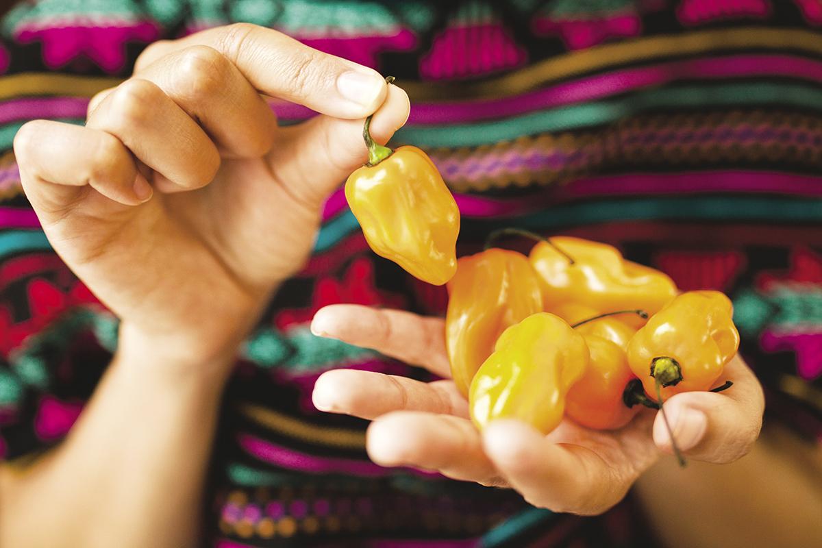 Cocina mexicana una destacada herencia femenina