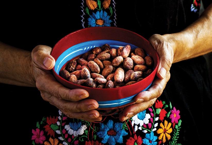 Por qué el cacao mexicano está en crisis? | Newsweek México