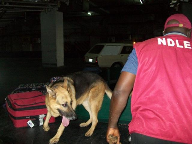 Photo Credit: nigeriavillagesquare.com