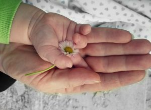 A hand of a baby with a flower on it resting in the mother's hand