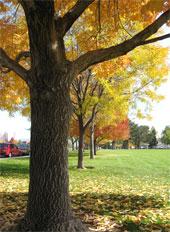 Fall scene in Reno, Nevada, NV