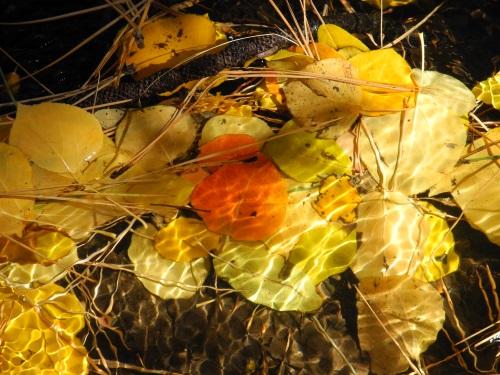 Thomas Creek, fall color, hiking, Reno, Nevada, NV
