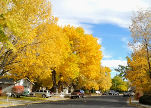 Fall trees, color, Reno, Nevada, NV