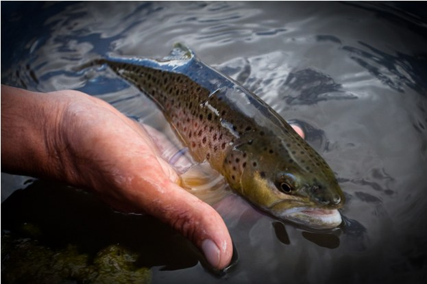trout_water