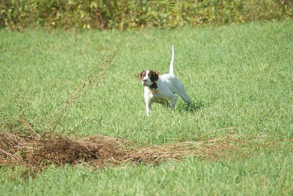 Field Trial 2009