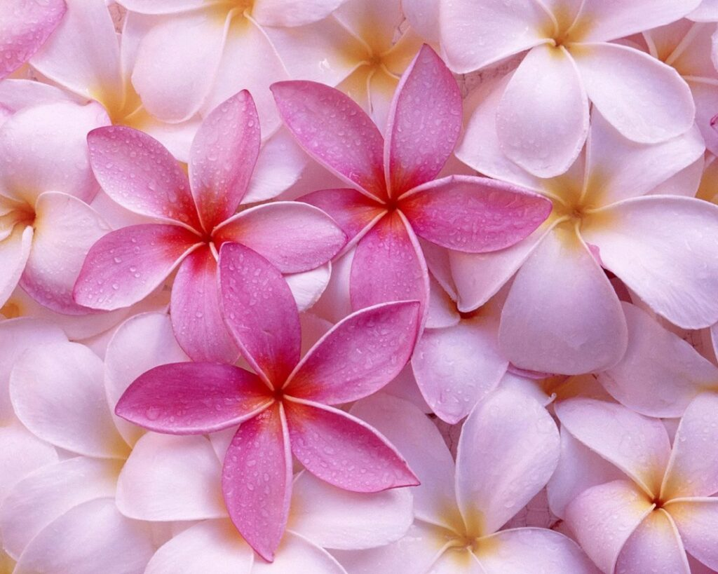 Cute Free Wallpapers For Cell Phones Fresh Flowers Hd Wallpapers Download For Desktop Hd Walls