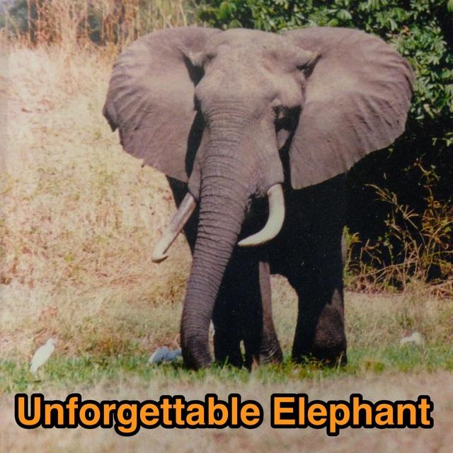 An Unforgettable Mana Pools Elephant