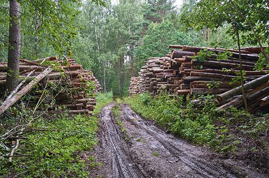 Данные из реестра недобросовестных арендаторов леса хотят удалять по решению суда