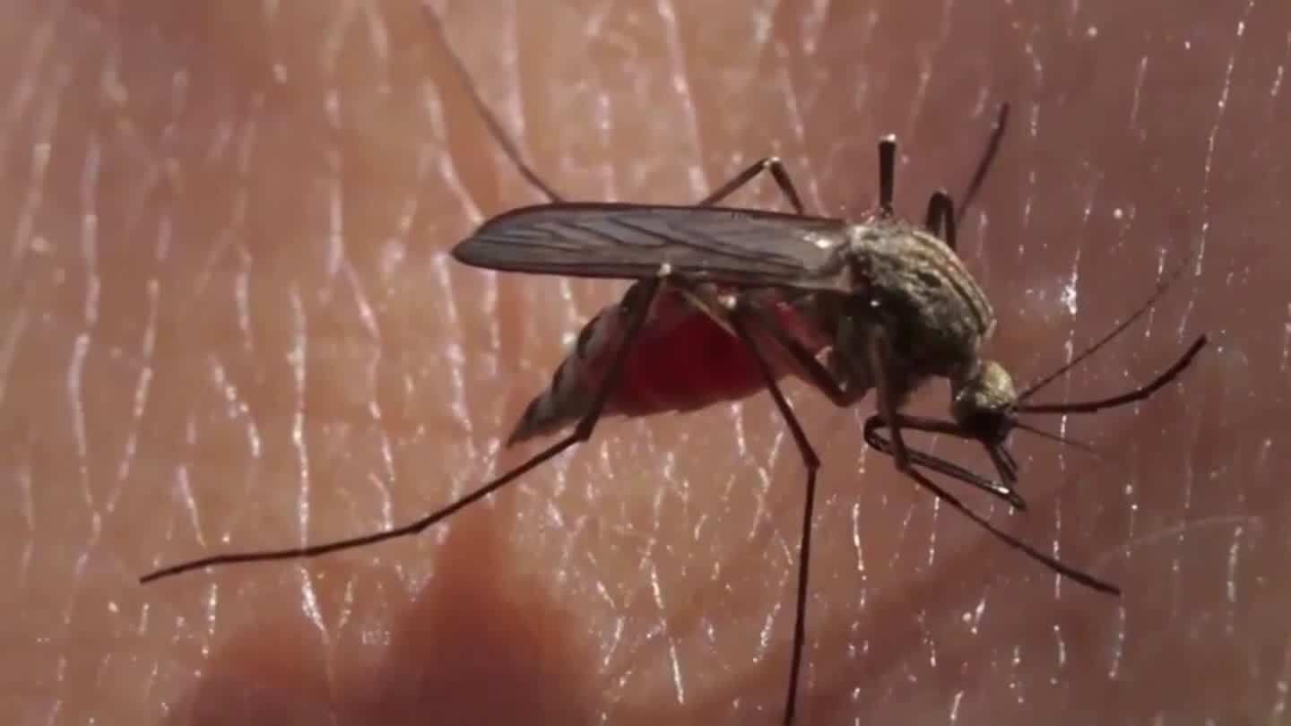 2 More Cases Of Deadly Mosquito-Borne Virus Diagnosed In New Jersey