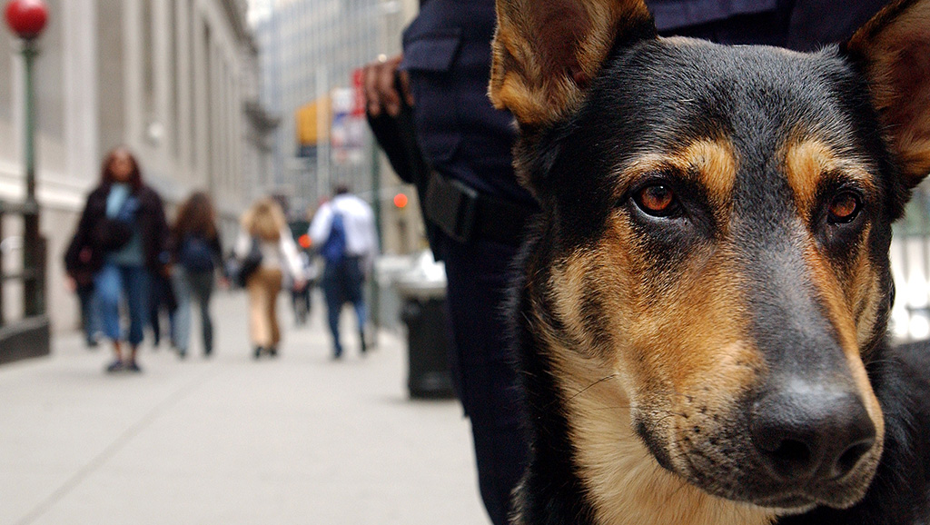 Schumer Blasts Trump Administration's Plan To End Funding For Bomb-Sniffing Dog Teamss