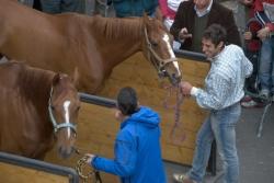 05. Horses
