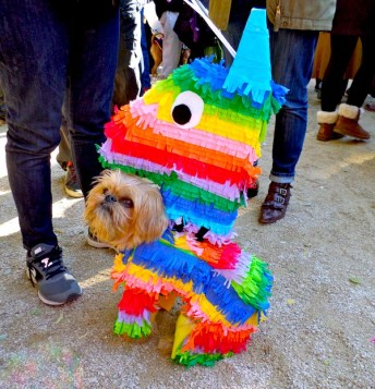 dogparade3