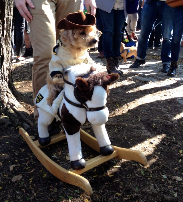 tompkins-square-halloween-dog-8