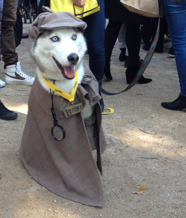 tompkins-square-halloween-dog-2
