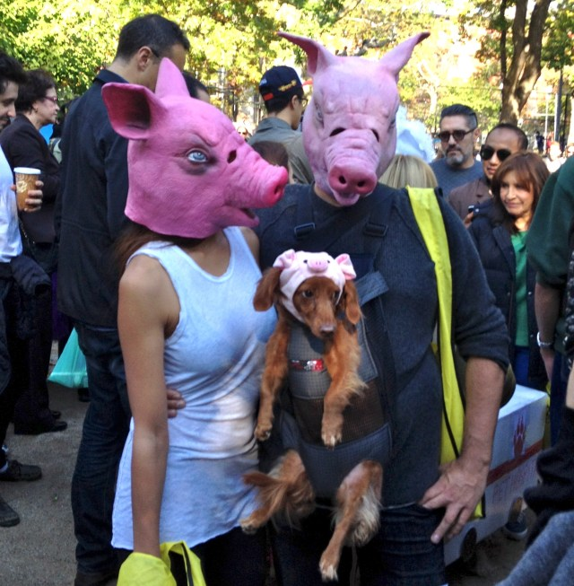 tompkins-square-halloween-dog-9