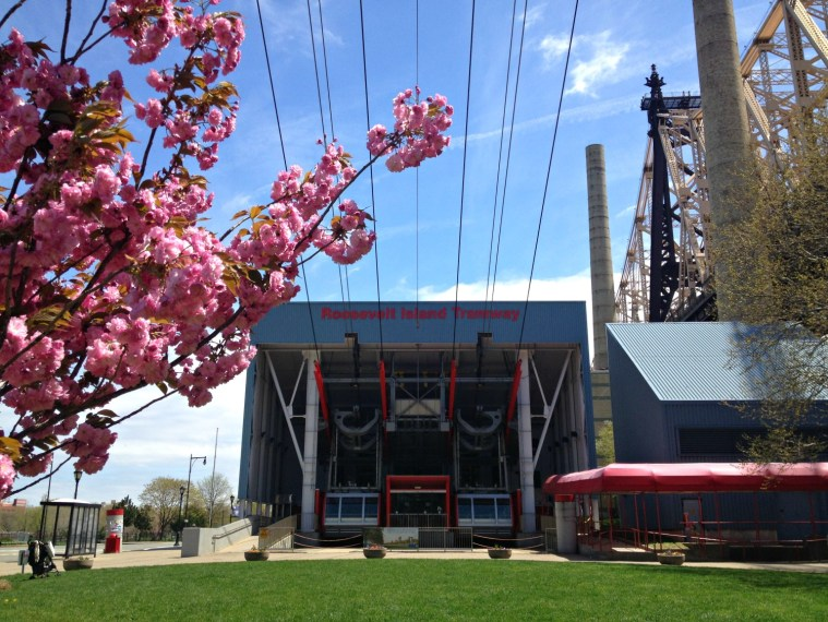 cherry-blossoms-roosevelt-island-tramway