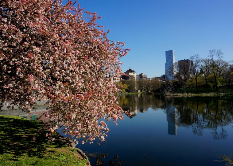 Central-Park-North-spring-pond
