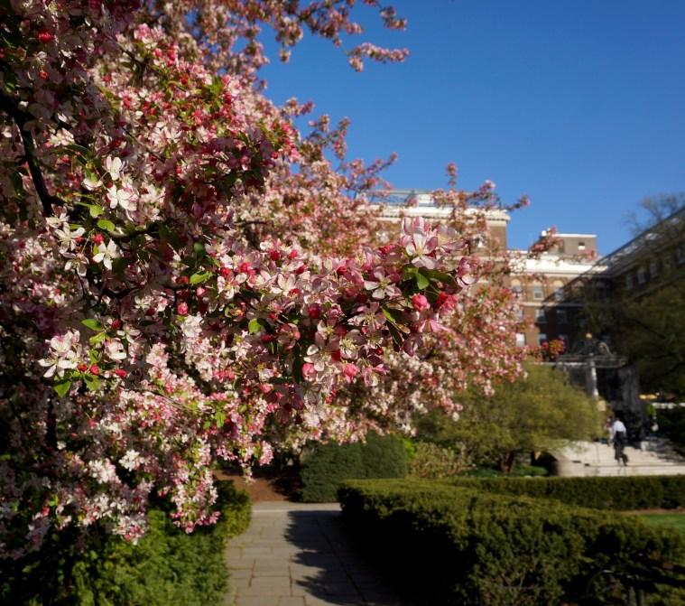 Central-Park-conservatory-garden-april