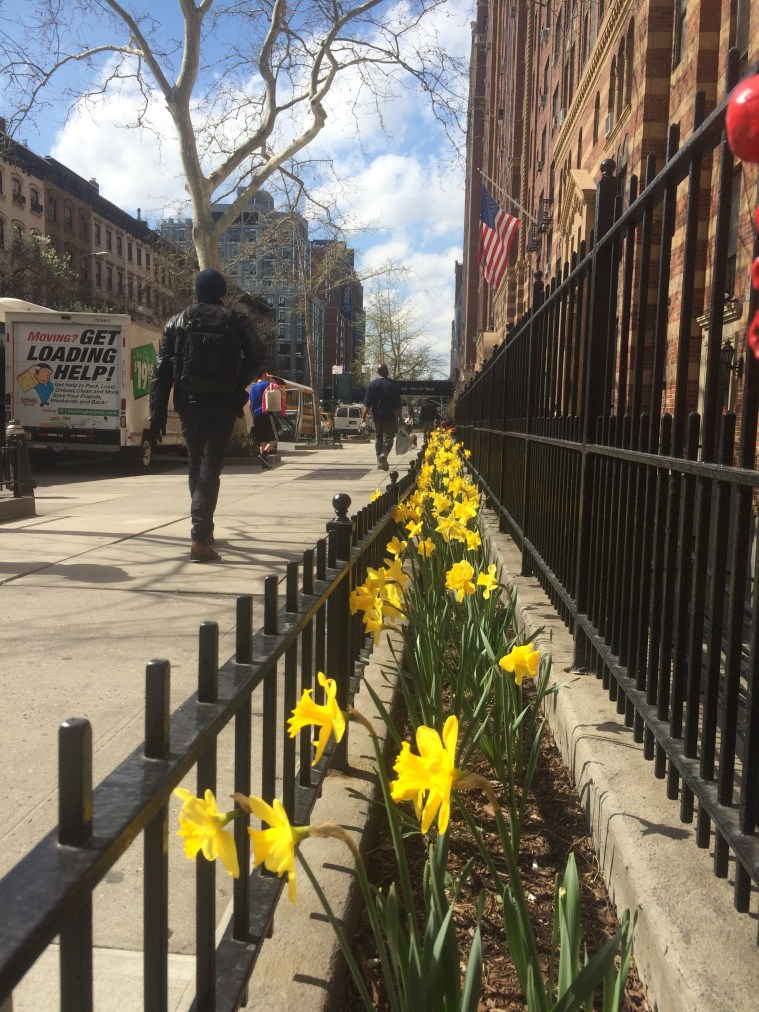 nyc-spring-flowers