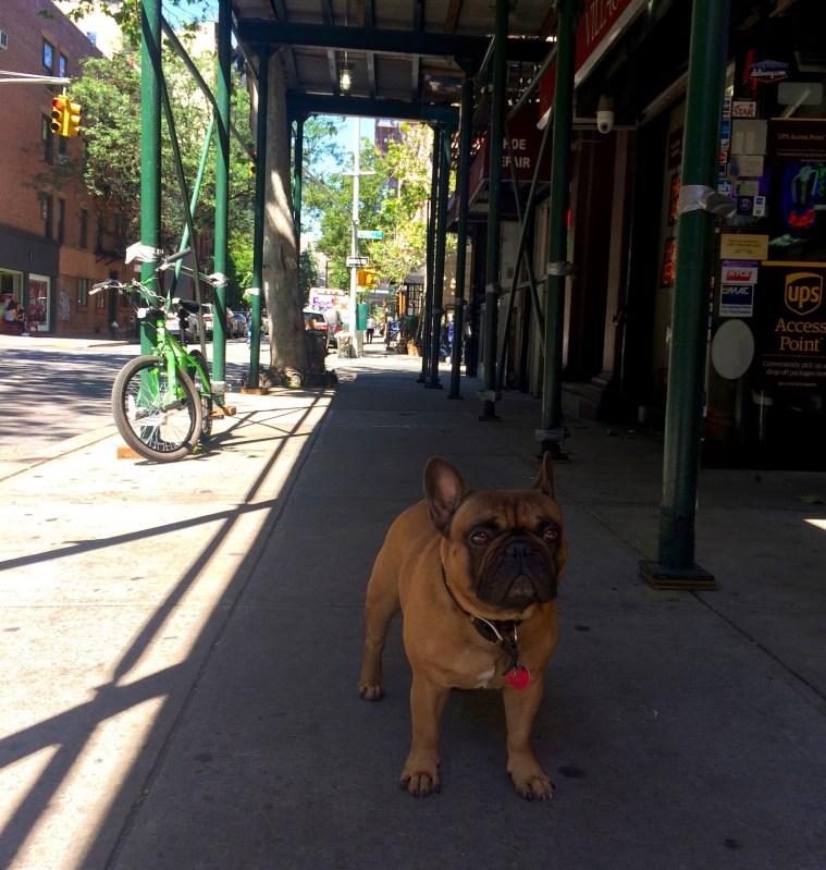 dog w broadway