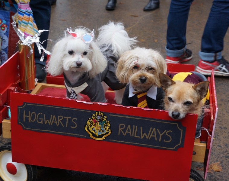 halloween-dog-parade-harry-potter
