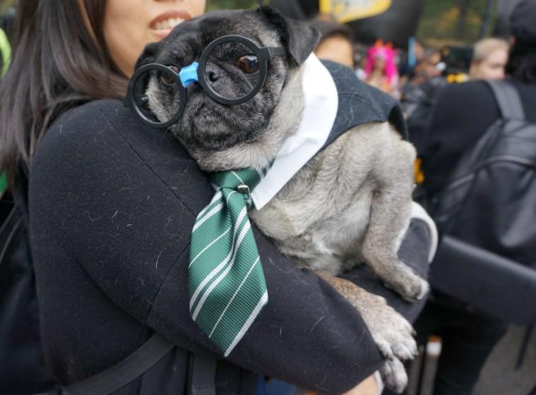 halloween-dog-parade-pug-slytherin