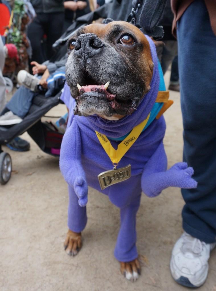 tompkins-square-park-halloween-dog-parade-nyc