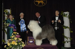 2013 herding winner 300x199 2013 Westminster Dog Show