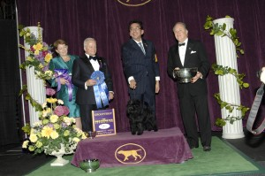 2013 toy winner 300x199 2013 Westminster Dog Show