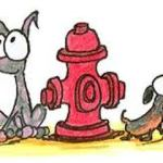 This is an image of dogs parked next to a fire hydrant, representing the subject of this page about beating a fire hydrant parking ticket