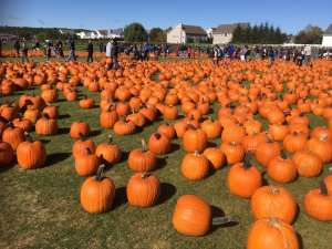 Top 9 best things to do on the North Fork of Long Island in the Fall!