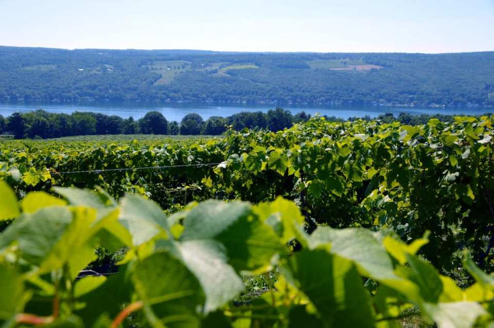 World-Class Wines in the New York Finger Lakes