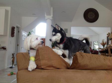 Phil Franckel's dogs Colby & Luna