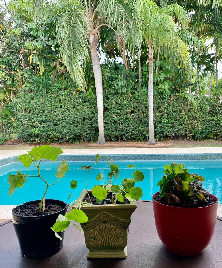 Planting Cucumbers, nasturtium and lettuce in pots