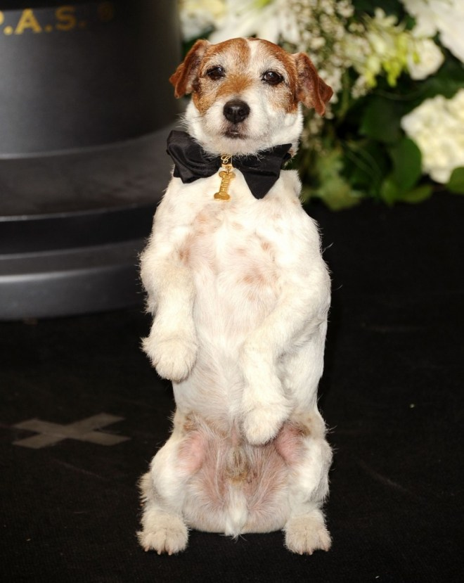 Uggie at the Academy Awards