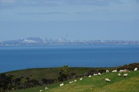 Auckland City aus der Ferne