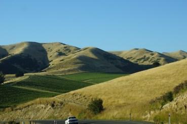 vertrocknete Hügel, dazwischen grüne Weinfelder