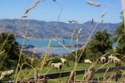 Blick auf den Akaroa Harbour